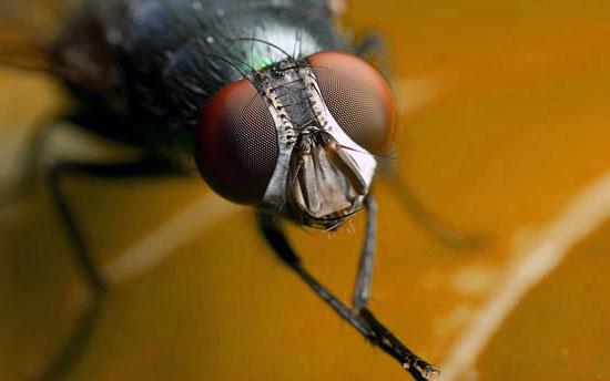 Уничтожение мух в Алматы