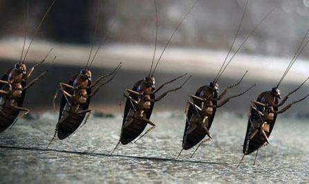Дезинфекция тараканов в Алматы